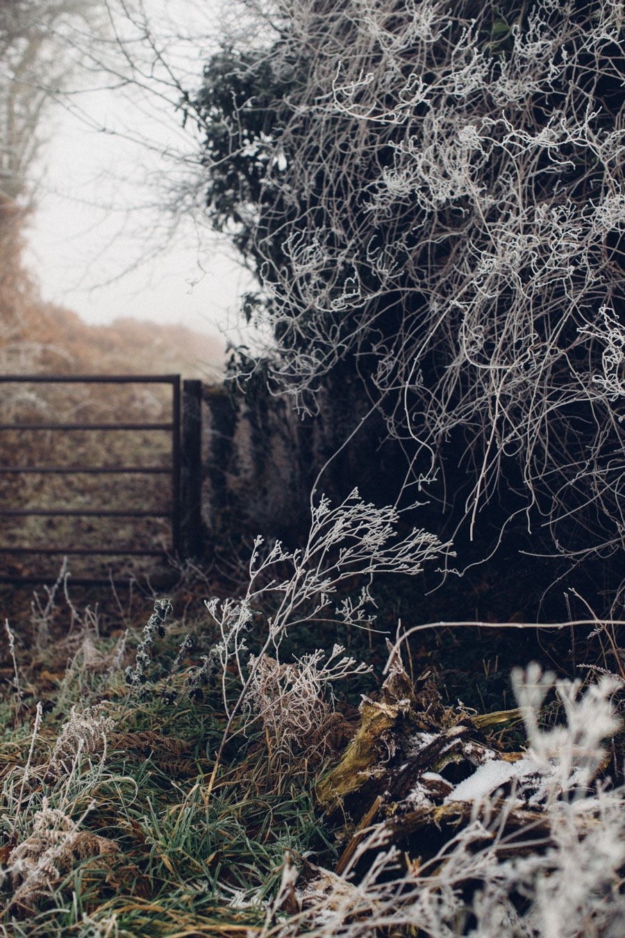 frozen country lane