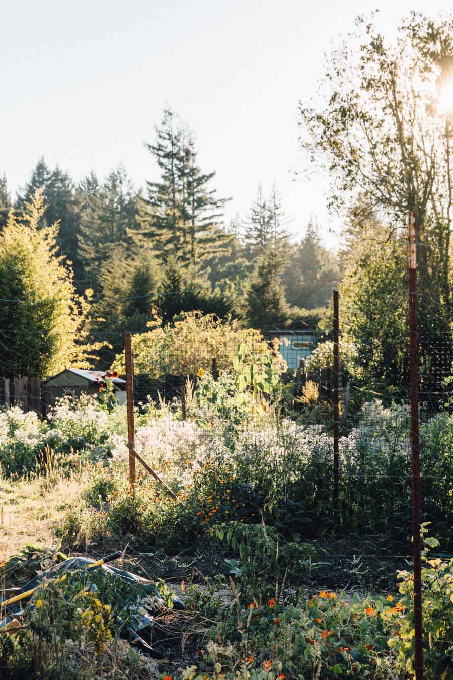 Wild organic garden