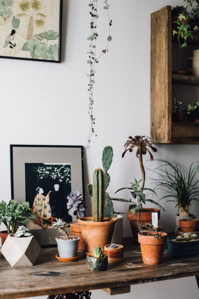 Plants for the office