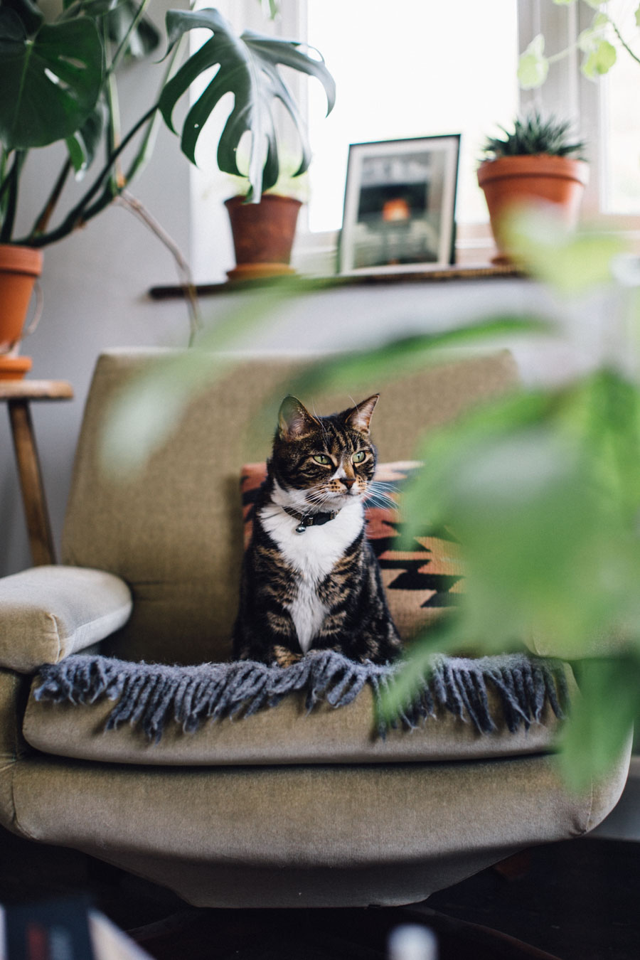 Tabby cat and plants