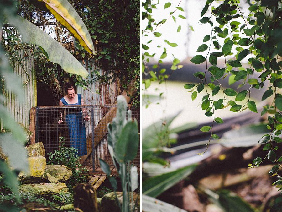 Ventnor Botanical Garden Hot House 2017