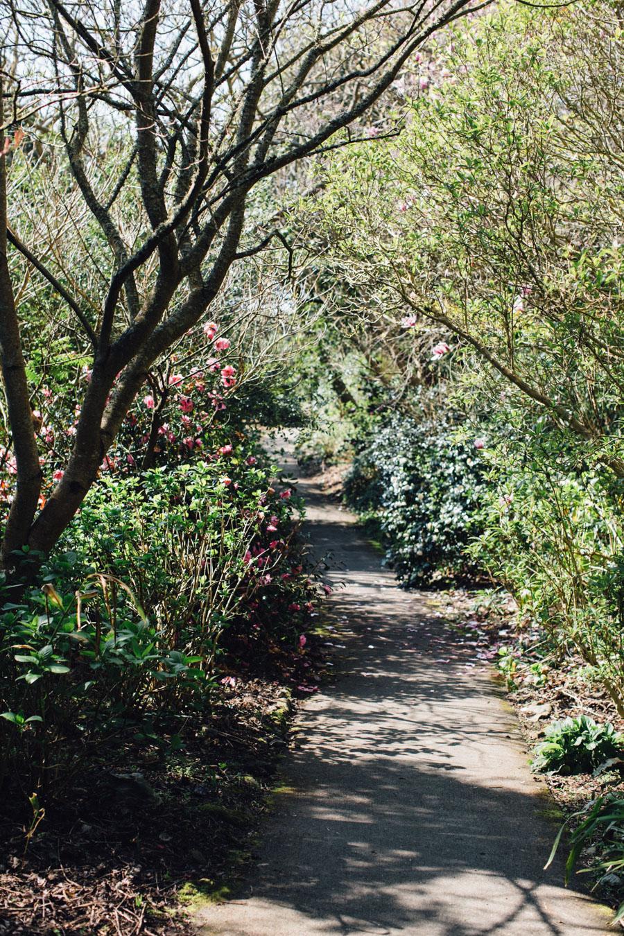 Ventnor Botanical Garden 2017