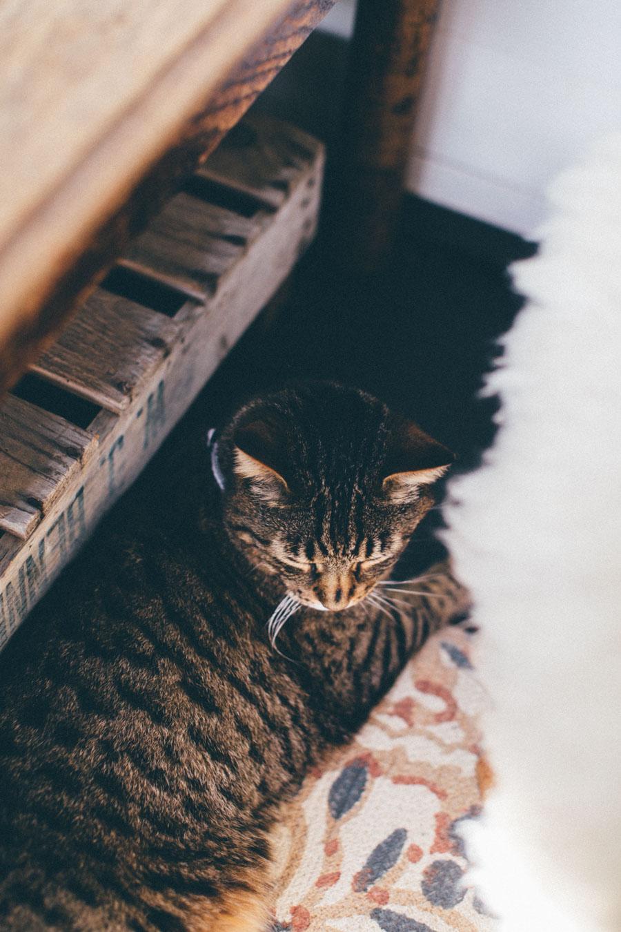 Wabi-sabi Tabby Cat