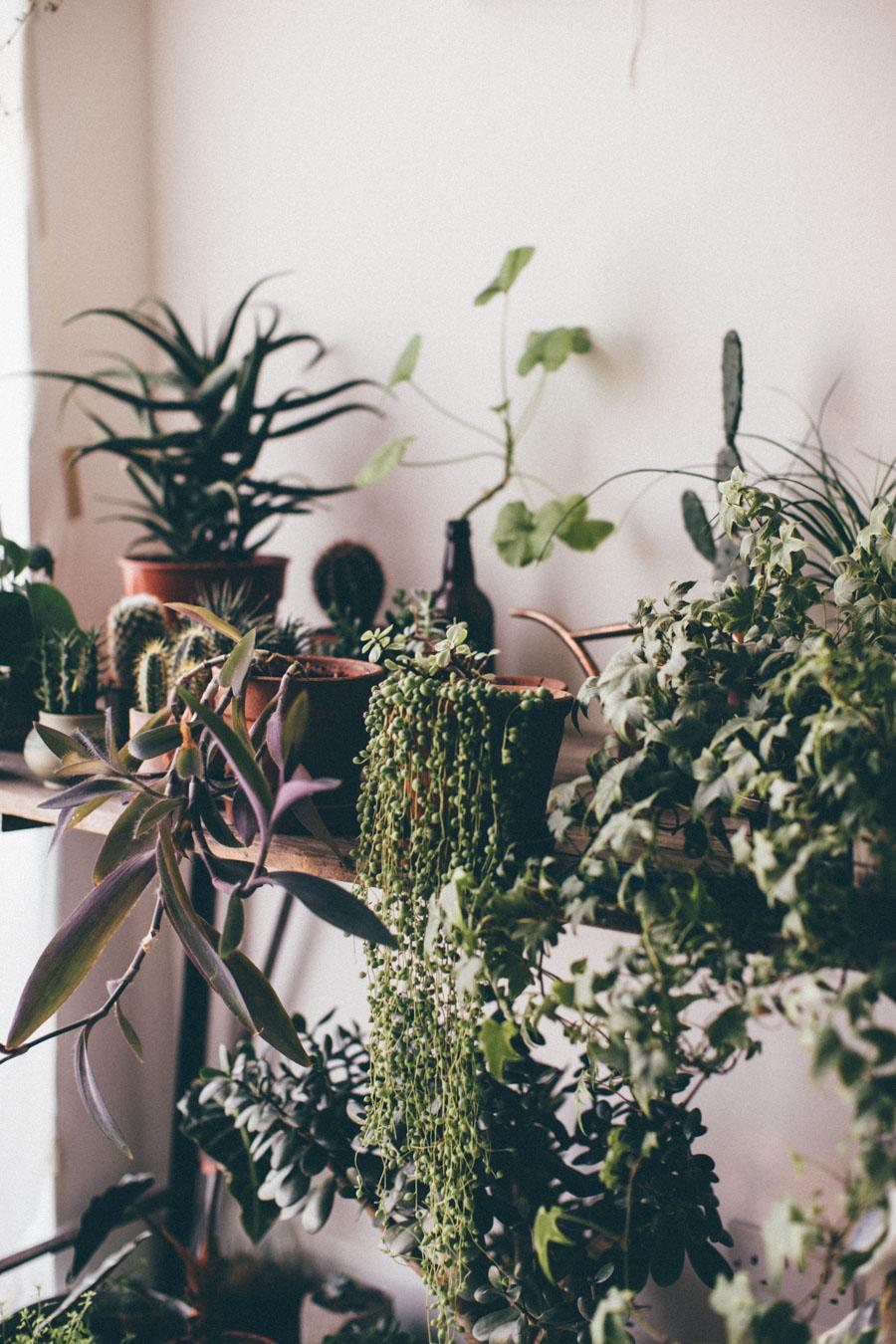 Office gardening