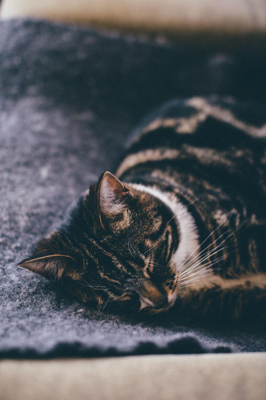 Wabi-sabi tabby cat - Wallis