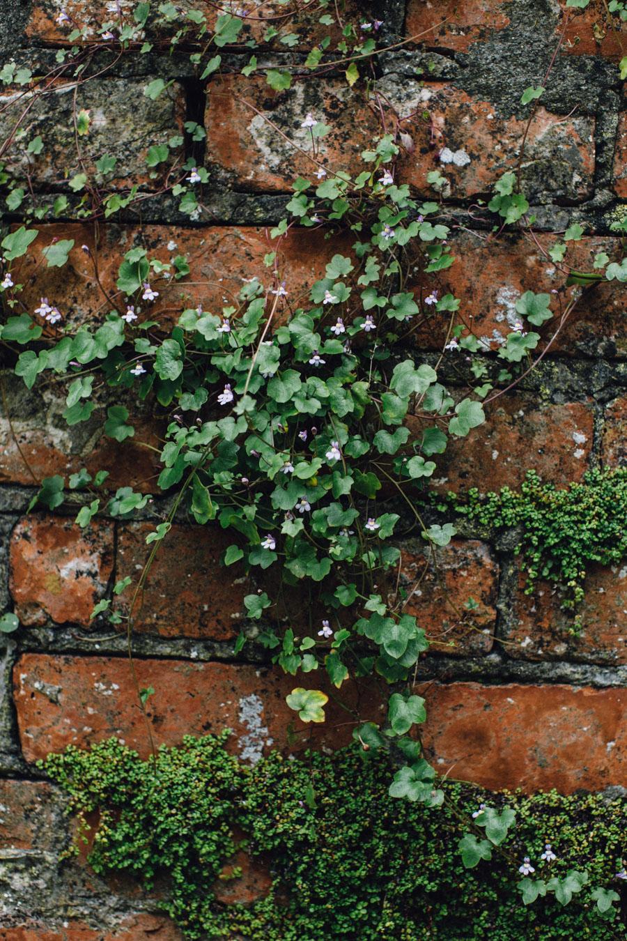 St Ives secret alley ways