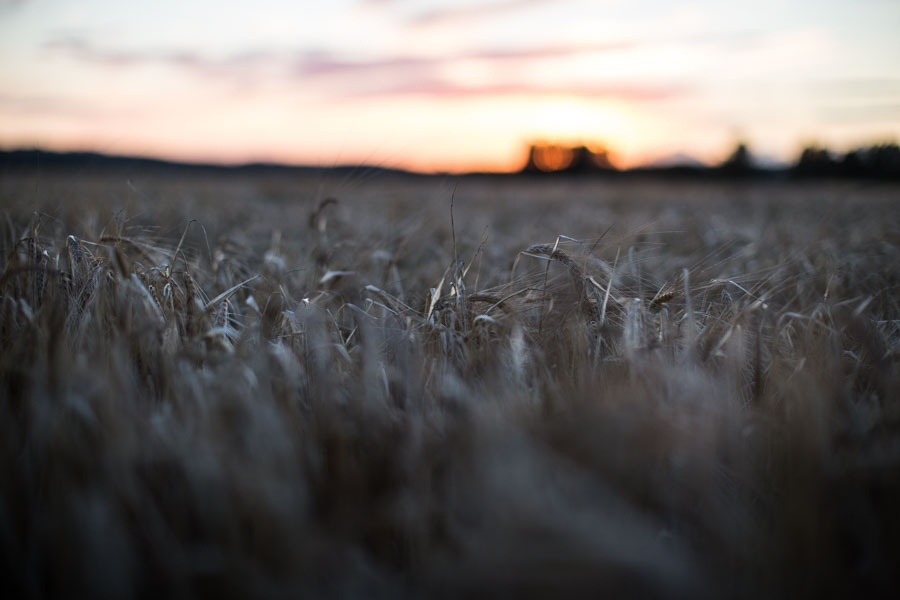 Sun down in the Swedish countryside