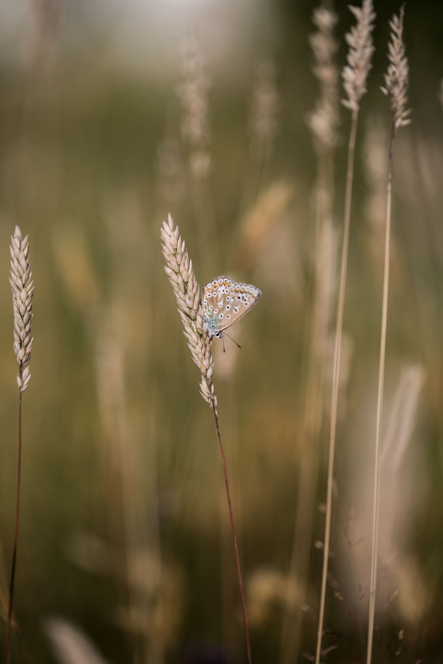 Butterfly count 2017