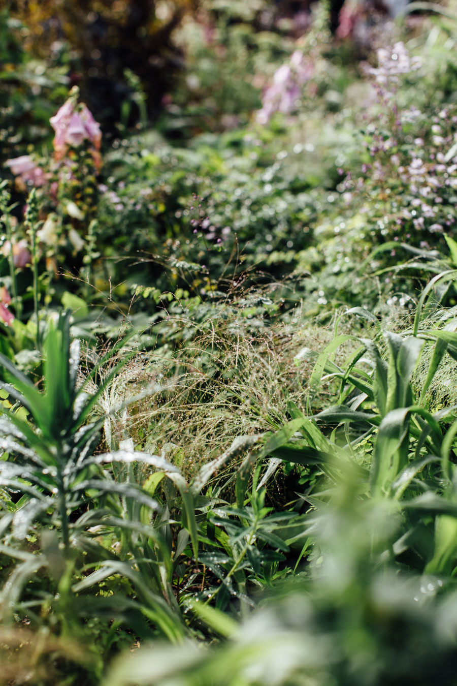 Wild grass planting ideas