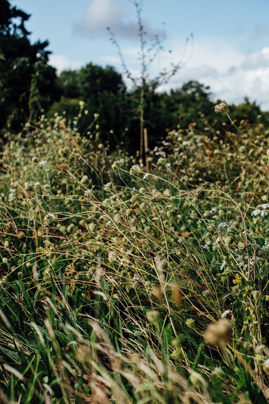 Wild meadow garden