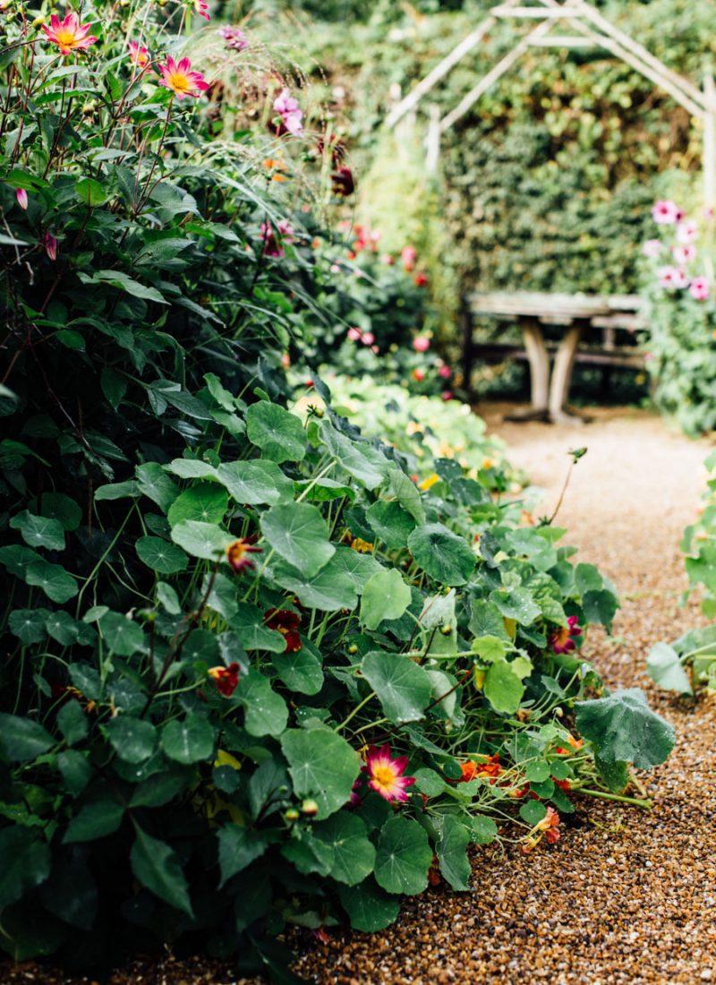 Wild garden inspiration