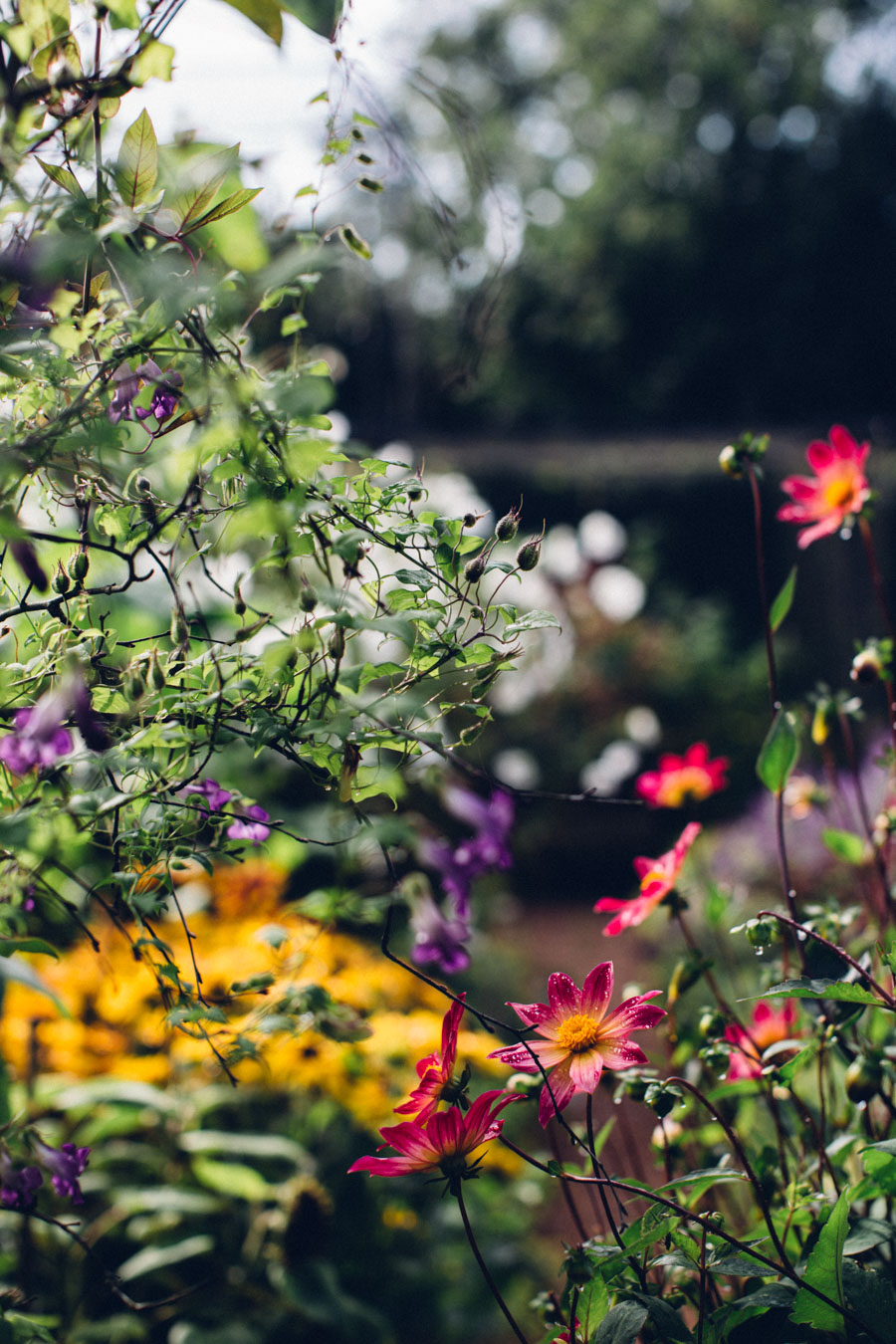 Jewel Bright Garden planting inspiration