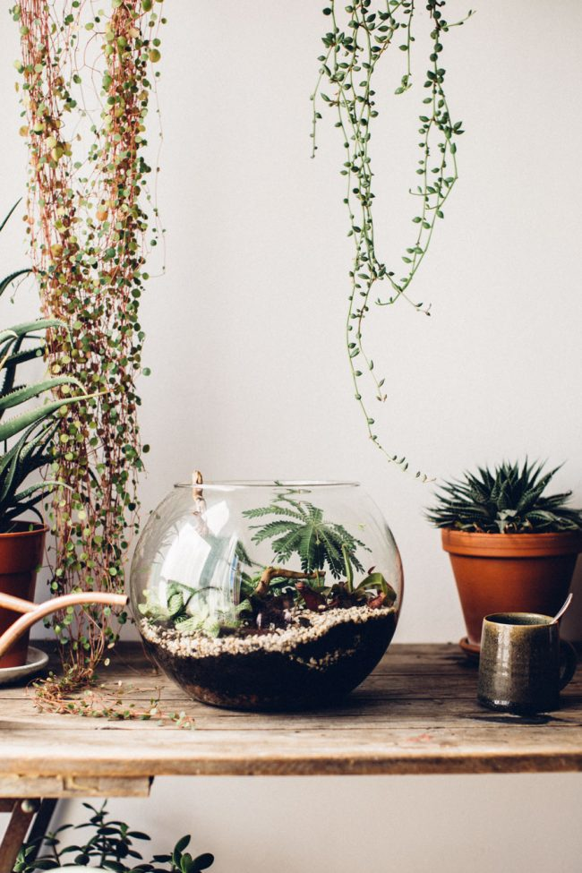 Plant the perfect Terrarium