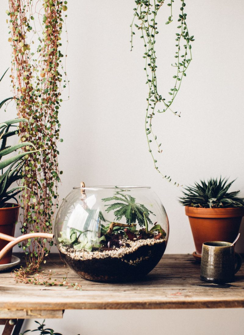 Plant the perfect Terrarium