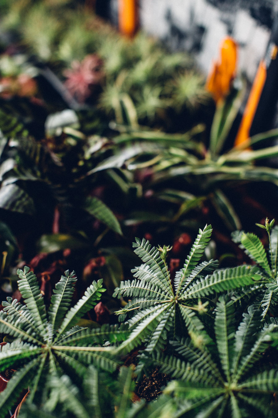 Choosing the right plants for a terrarium
