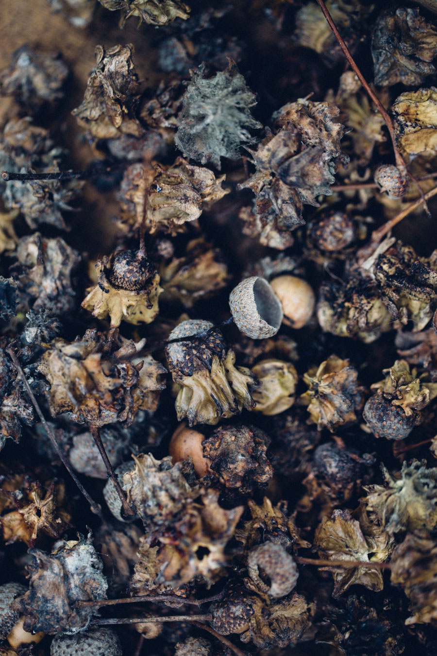 Foraging for Natural Dye Plants
