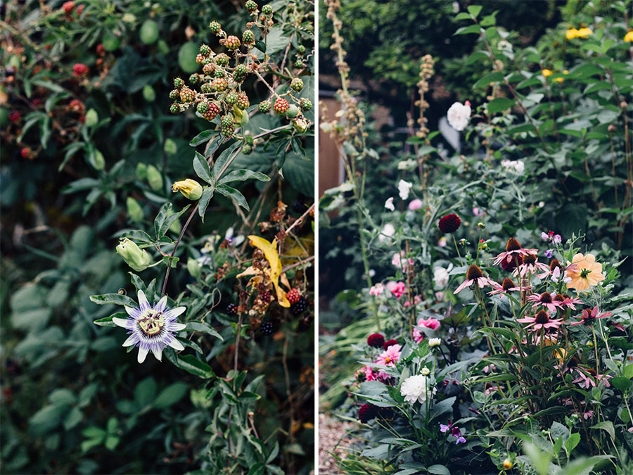 Foraging for Natural Dye Plants allotment and gardens