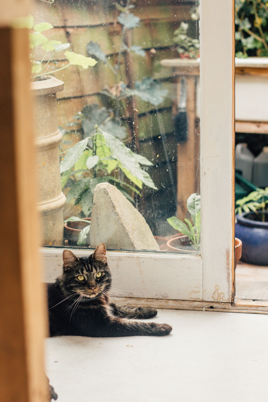 studio visitor - Malcolm the cat