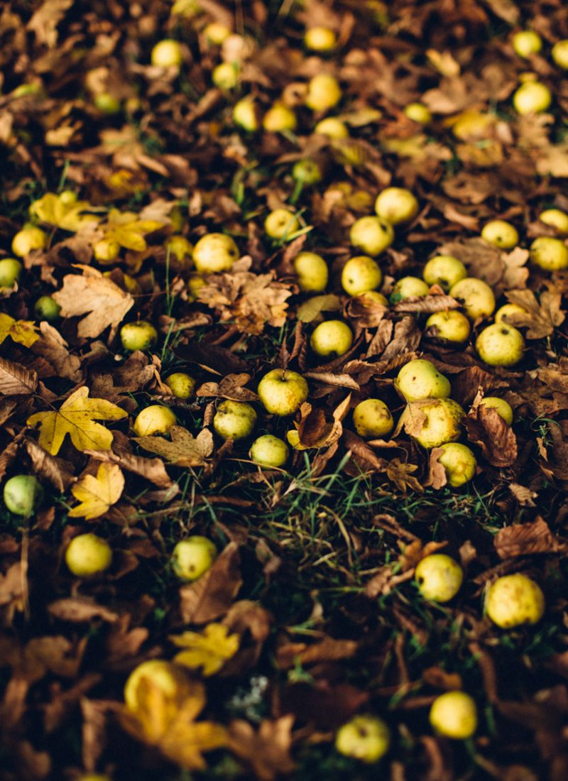 Autumn crab apples