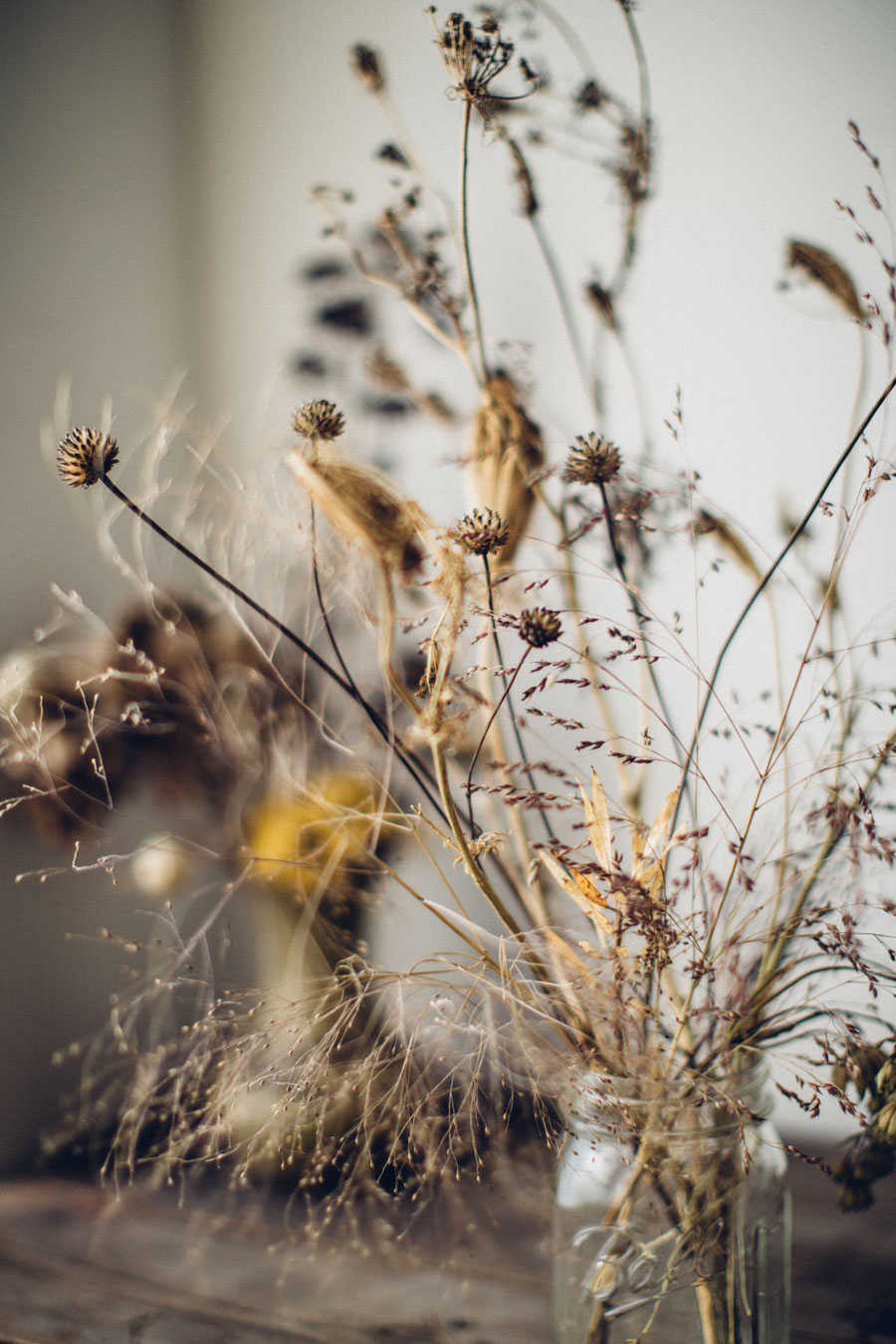 Collected dried flower stems
