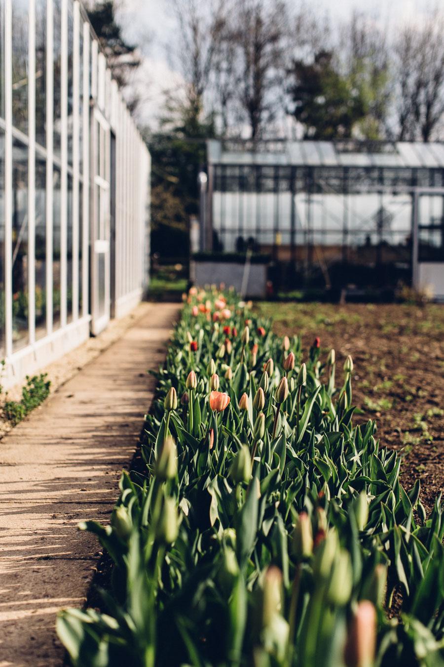 Tulip aisle