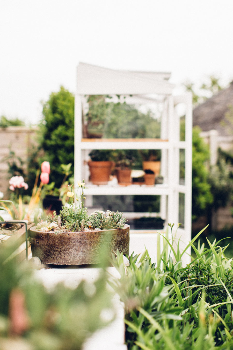 Vintage victorian growhouse
