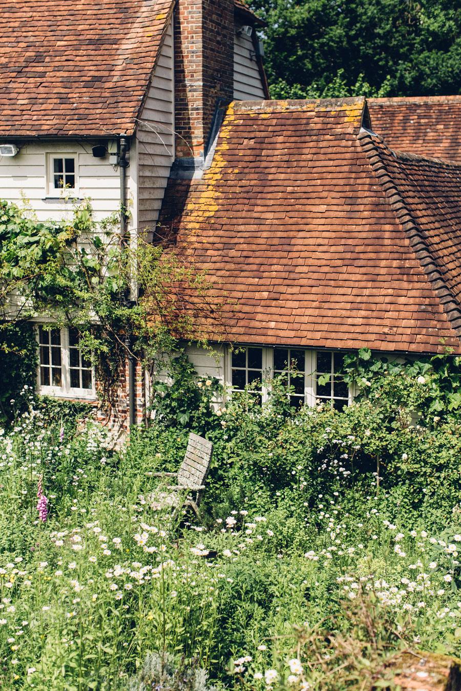 Wild cottage garden planting