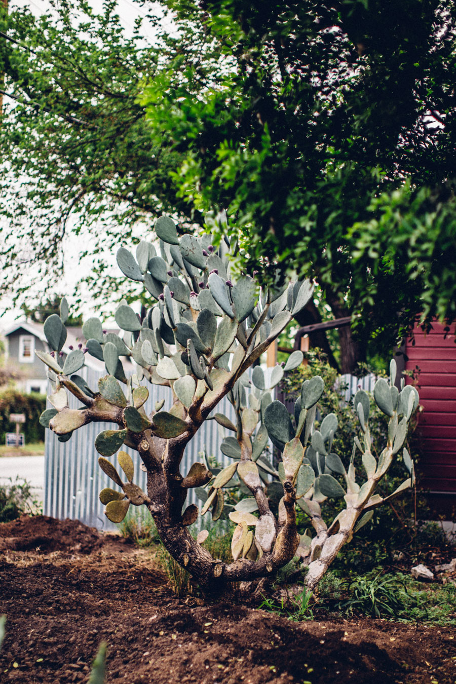 Willow Street Austin Texas