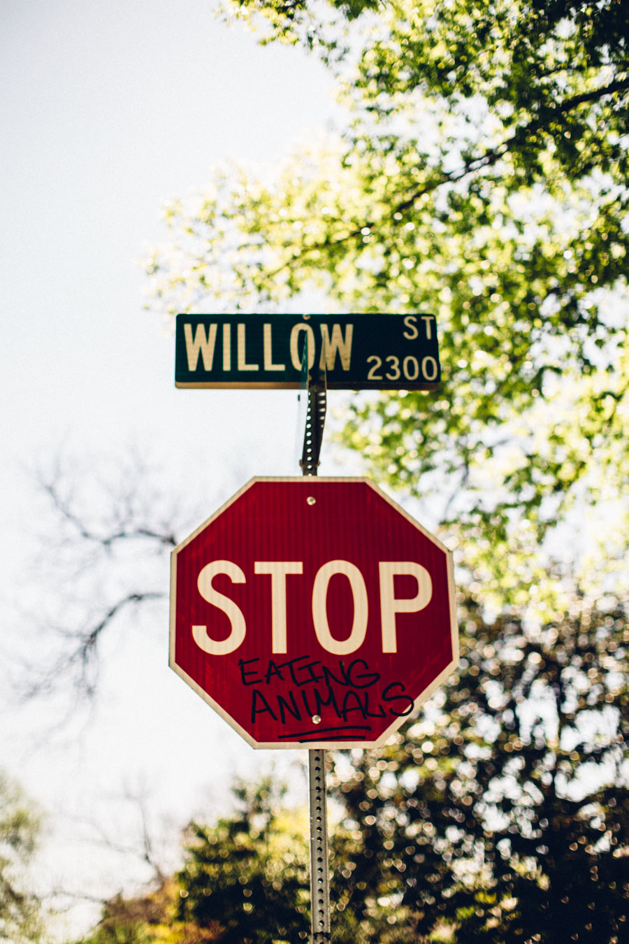 Willow Street Austin Texas
