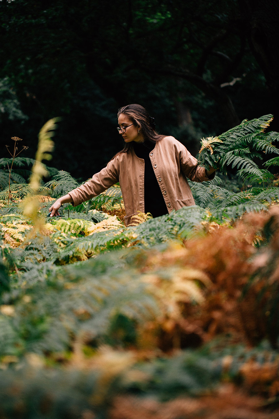 Foraging for bracken - The Wild Dyer