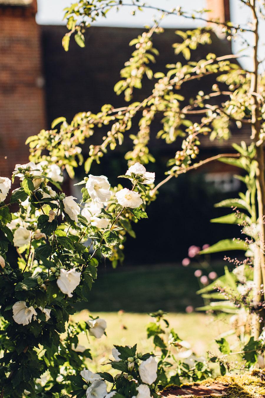 Sunny suffolk garden