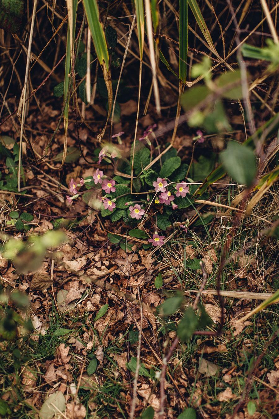 Hidden Primroses