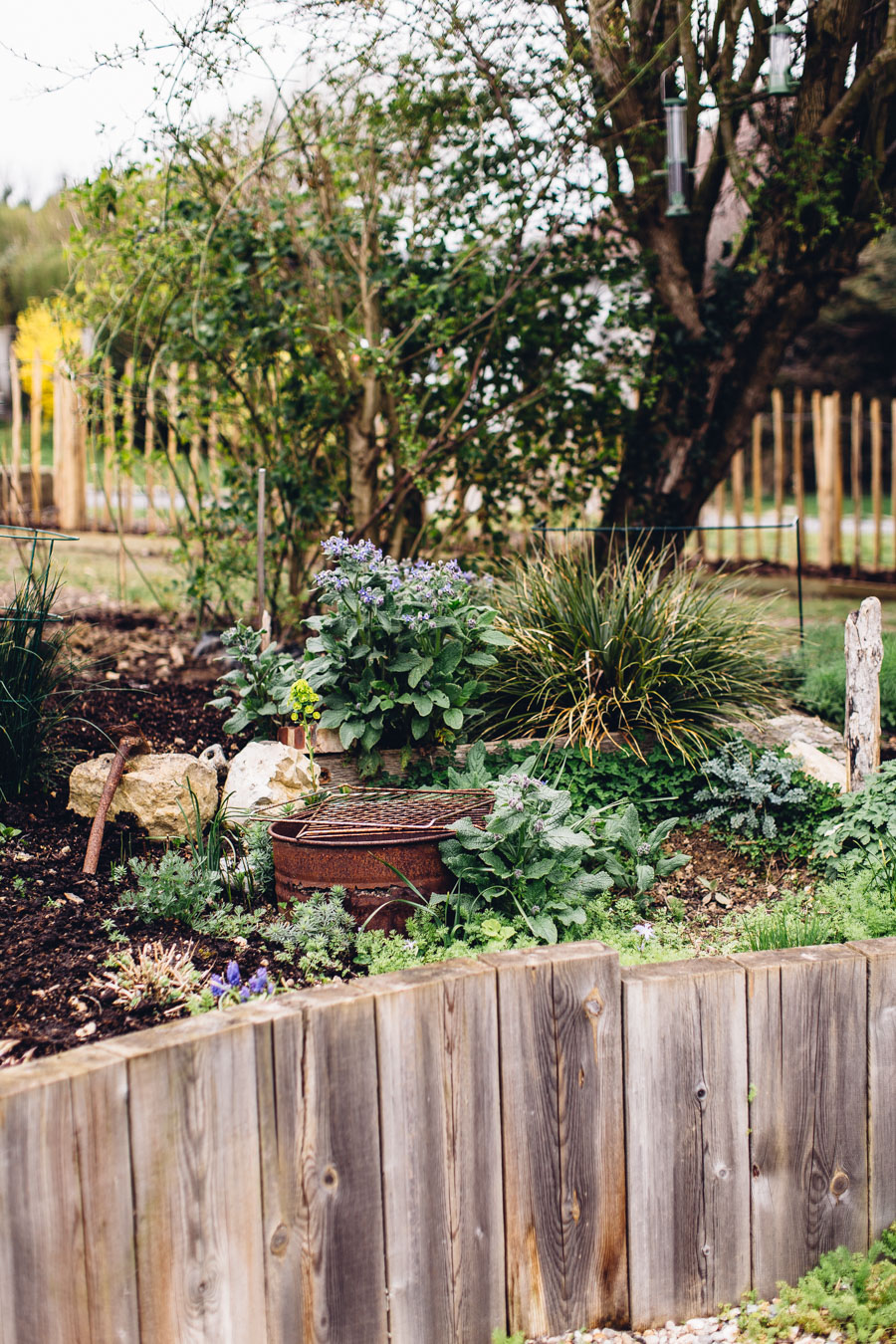 Garden mulching and what's growing in April