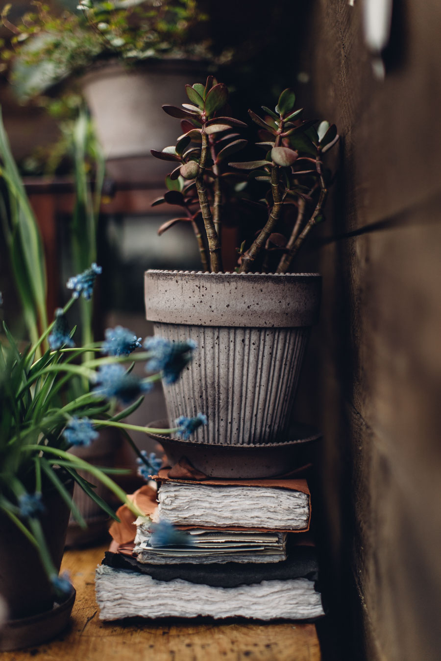 Potting up bulbs