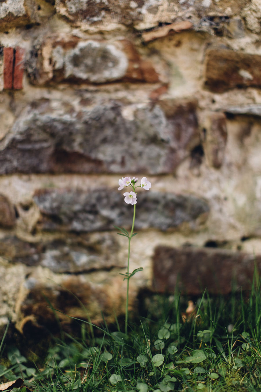 Tiny wild spring flowers